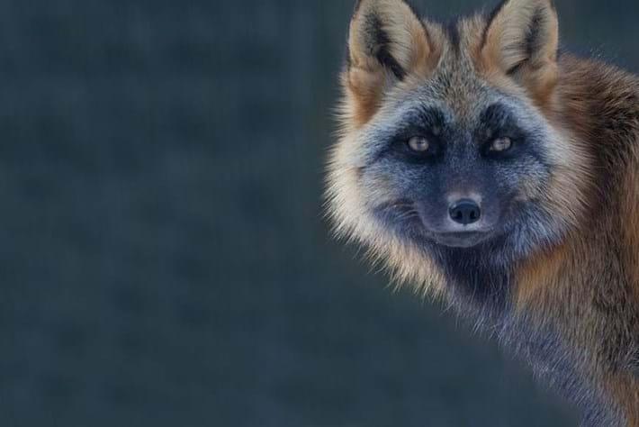 fox-header-2015-1-19