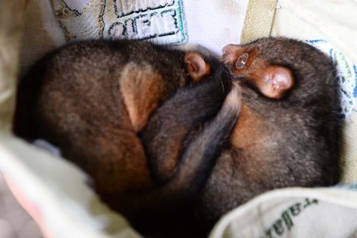 possum-possums 1-2015-1-20