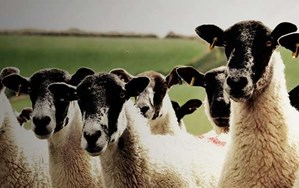 The violence of the lambs: Animal vegetarians who dabble in flesh