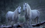 Finally, a plausible theory explains the disappearance of unicorns