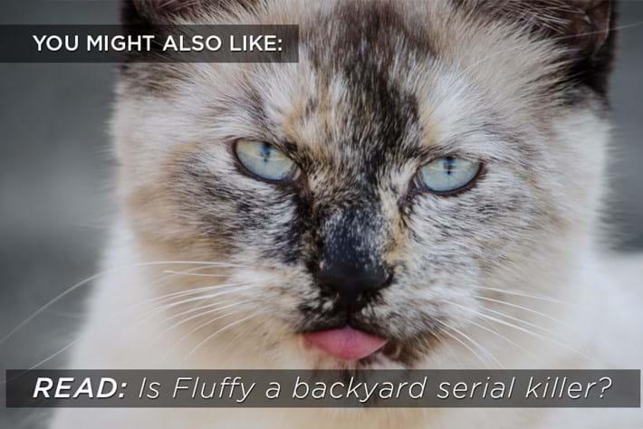 Cat Serial Killer Related Content 2015 02 05