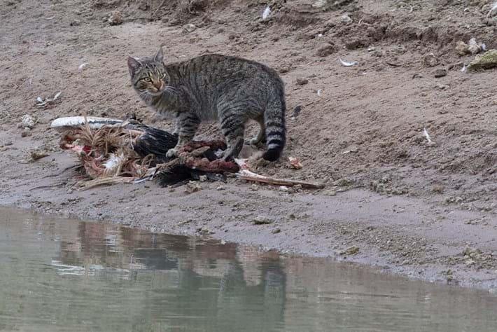cat killer_2015_02_09