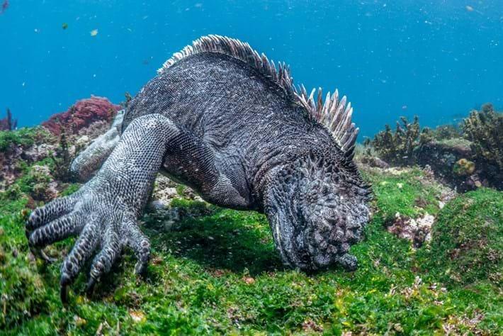 Iguana Page