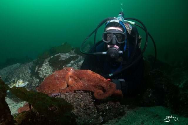 Octopus Face 2015 02 26