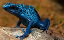Black or blue? White or gold? Forget the dress, these 10 animals won't leave you questioning their colour