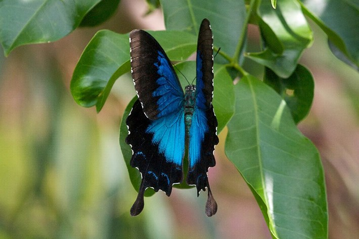 Ulysses Butterfly The Dress 2015 02 27