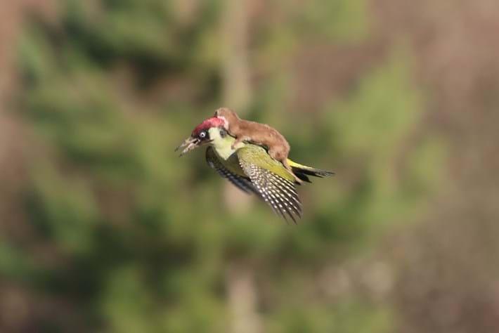 woodpecker-page-2015-3-1