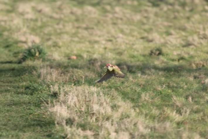 woodpecker-2-2015-3-2
