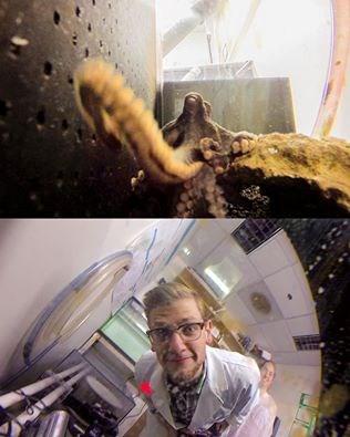 Octopus Ben Savard 2015 03 04