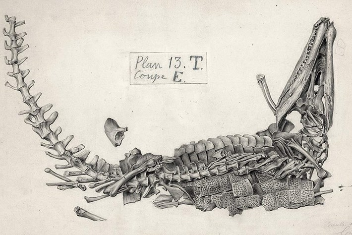 These beautiful 19th-century illustrations capture dinosaur 'death poses'
