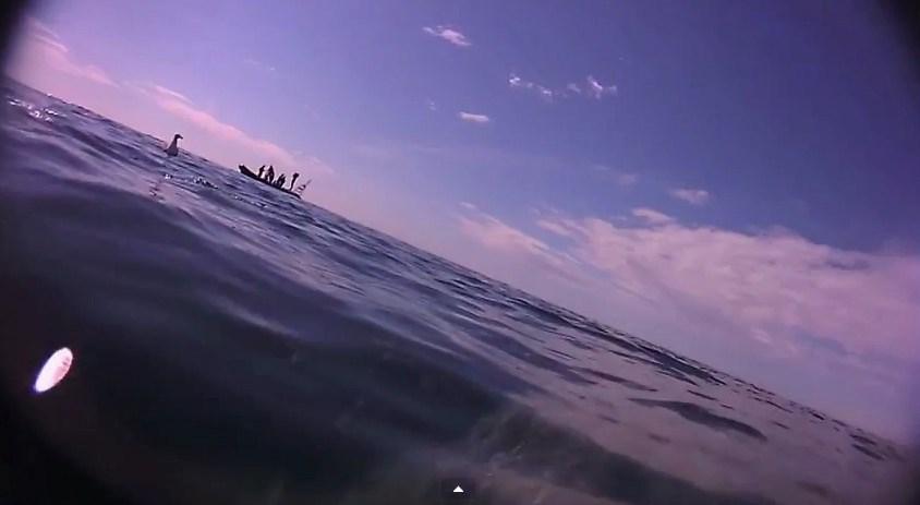basking shark-page-2015-4-3