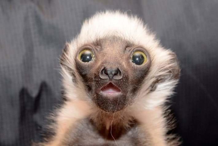 lemur baby-page-2015-3-5