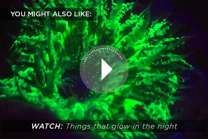 Florescence Coral 2015 03 11