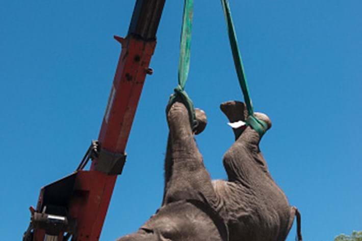 Elephant relocation crane 2015-03-17