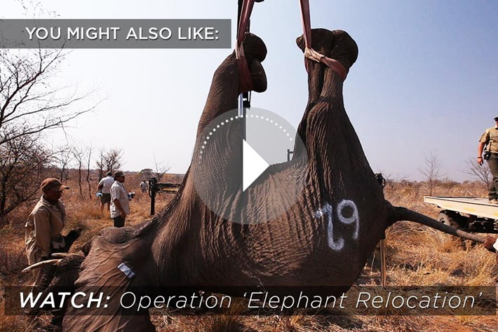 2015 03 17 Operation Elephant Relocation Related Content