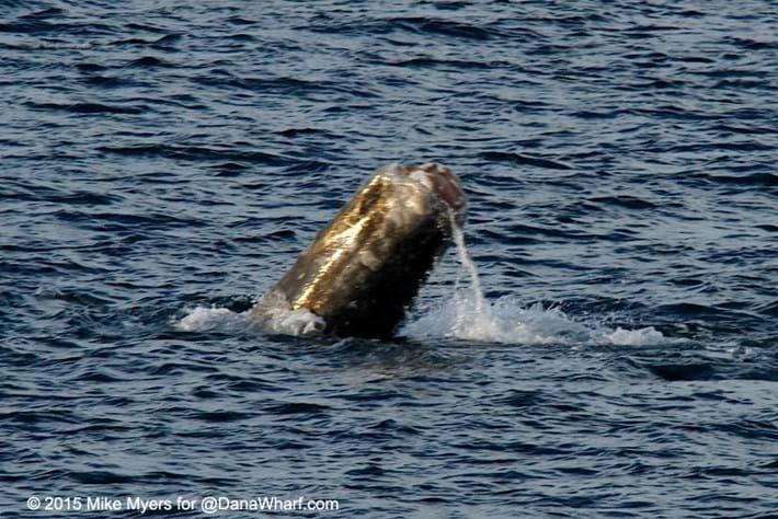 whale-1-2015-3-17