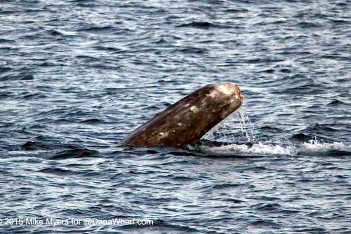 whale-2-2015-3-17