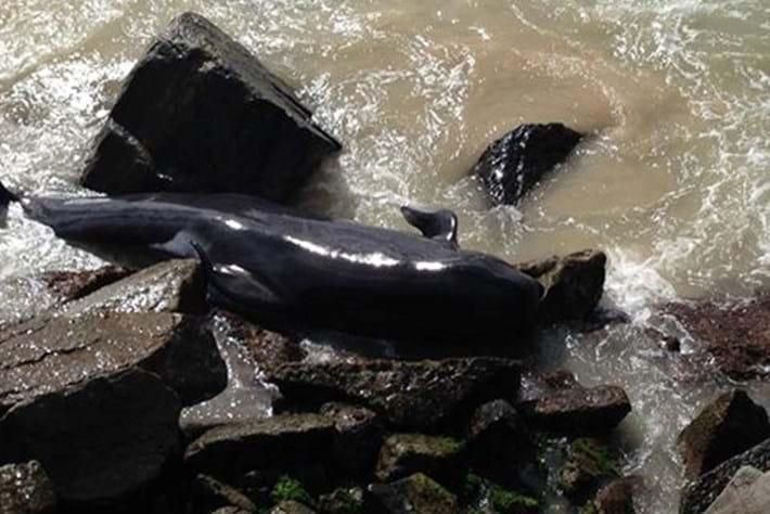 Whale Stranding1 2015 03 23