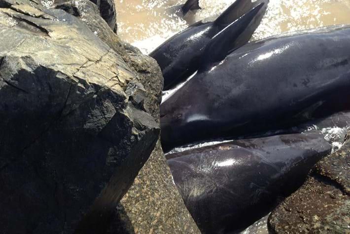 Whale Stranding 2015 03 23