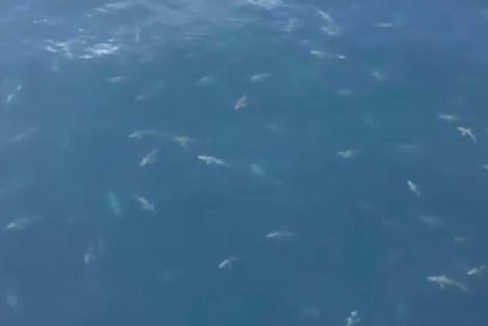 shark swarm-2015-3-24