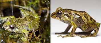 xmen frog-change-2015-3-24