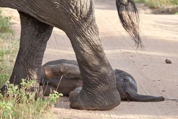 Newborn Elephant 2_2015_03_25