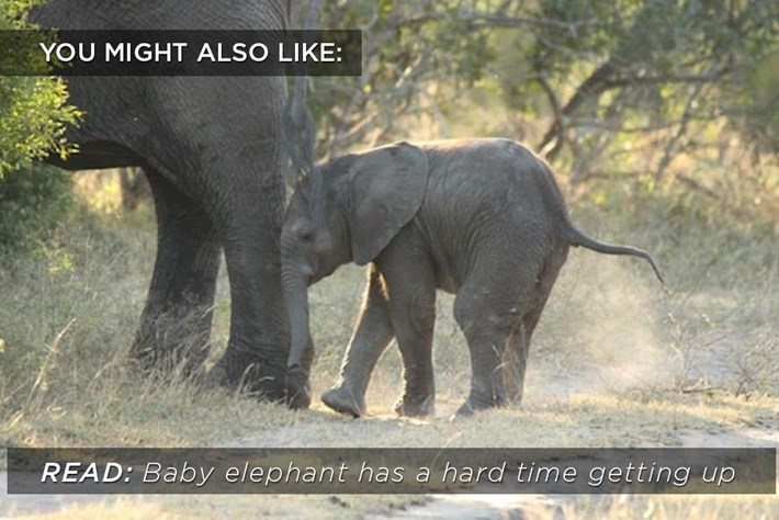 Baby Ellie Related Content 2015 03 25